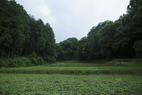 展示・ワークショップ|西明寺原風景「ドウメキのコウホネ」