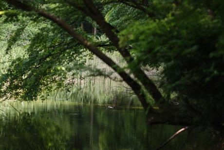 展示|「波紋/池を巡る13の物語」|川崎義博