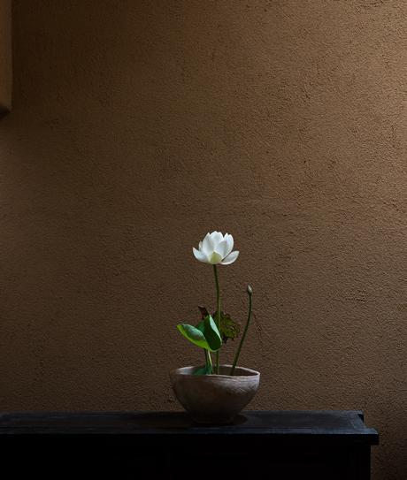 関連企画|杉謙太郎「花会」